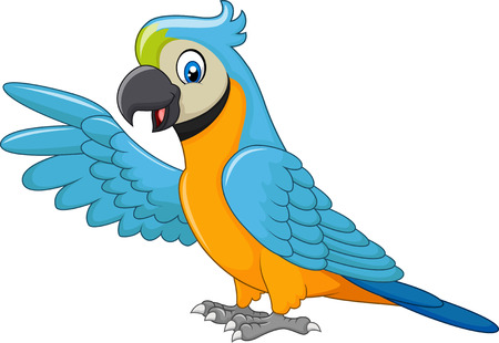 Vector illustration of Cartoon macaw presenting isolated on white background