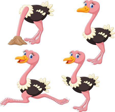 avestruz: Ilustración del vector de la colección de avestruz divertida historieta fijó en el fondo blanco