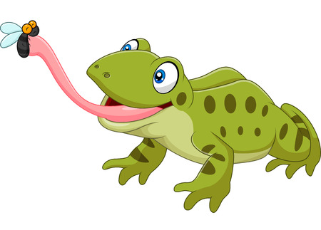 Vector illustration of Cute frog catching fly isolated on white background Illustration