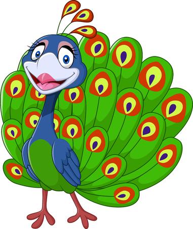 pajaro caricatura: Ilustración del vector del pavo real lindo aislado en el fondo blanco