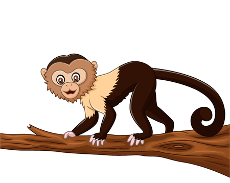 amazon rainforest: Vector illustration of Cute squirrel monkey isolated on white background