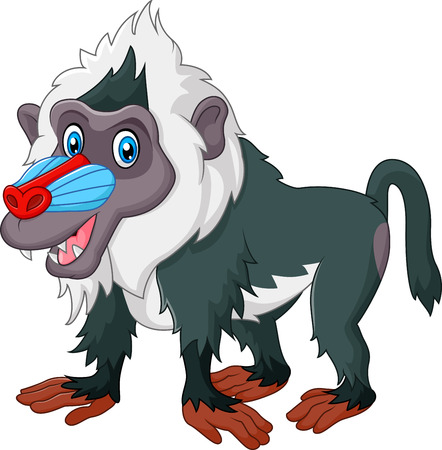 mandrill: Vector illustration of Cute baboon isolated on white bacjground
