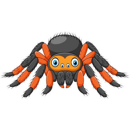 arachnid: Vector illustration of Cartoon spider tarantula with red knees. Danger animal