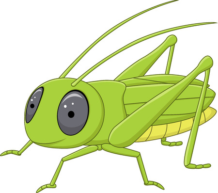langosta: Ilustración del vector de Valanga linda posando nigricornis