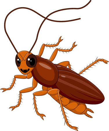 cartoon bug: Vector illustration of Cute Cockroach isolated on white background
