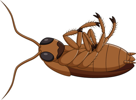 cartoon bug: Vector illustration of Cartoon dead cockroach