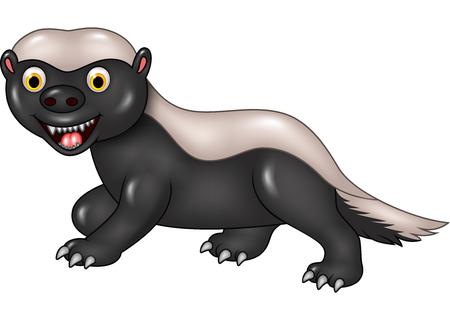 carnivora: Vector illustration of Cartoon funny honey badger isolated on white background Illustration