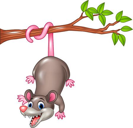 Vector illustration of Cartoon funny Opossum on a Tree Branch Illustration