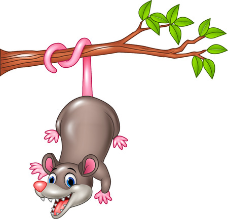 varmint: Vector illustration of Cartoon funny Opossum on a Tree Branch Illustration