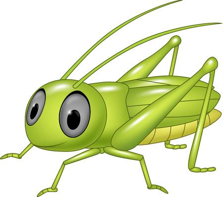 locust: Vector illustration of Cute grasshopper posing isolated on white background