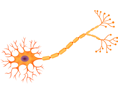 Vector illustration of Human Neuron Anatomy