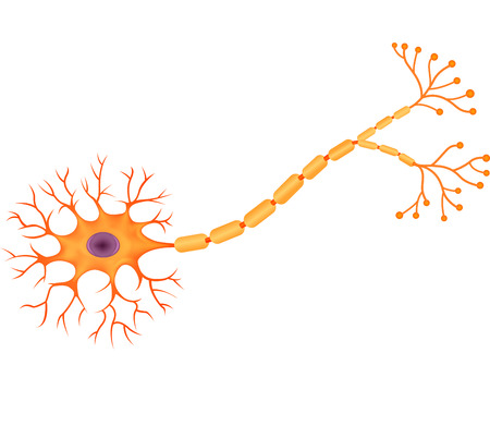 schemes: Vector illustration of Human Neuron Anatomy