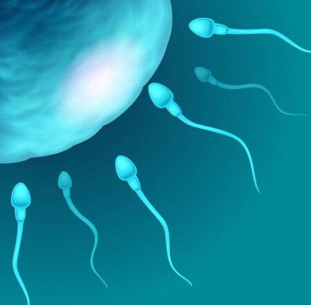 spermatozoon: Vector illustration of sperms going to the ovule. Image concept of fecundation.