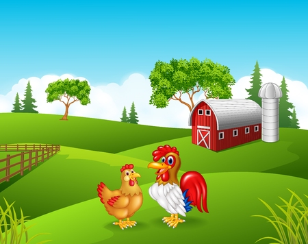 grass: Vector illustration of Cartoon chicken rooster in the farm Illustration
