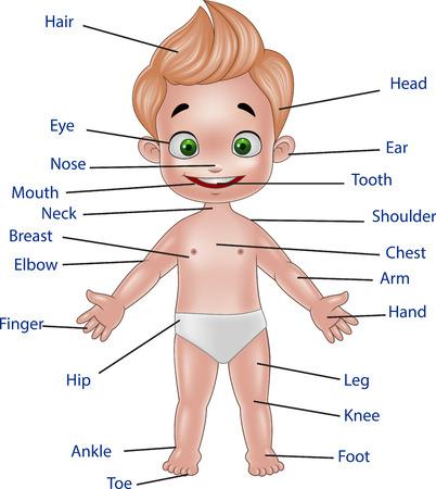 nackter junge: Vector Abbildung des menschlichen Körpers auf weißem Hintergrund Illustration