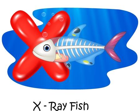 x xray: Vector illustration X of letter X-ray fish Illustration