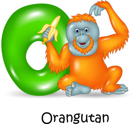 spelling book: Vector illustration of O Letter for Orangutan Illustration