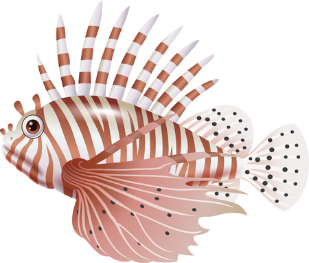 zebrafish: Vector illustration of Cartoon scorpion fish isolated on white background