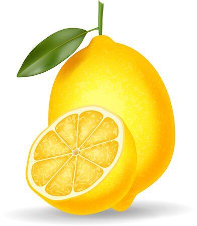 savory: Vector illustration of Fresh lemon isolated on white background
