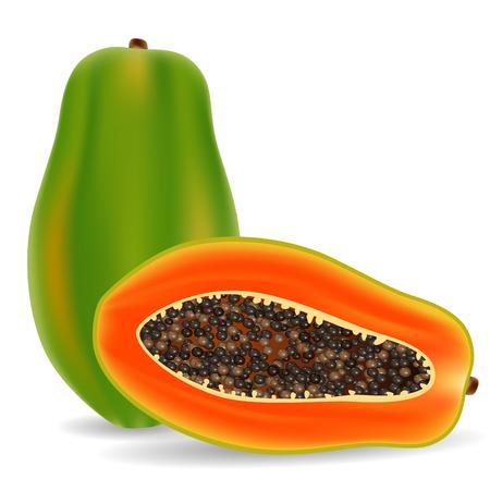 appetizers: Vector illustration of Fresh papaya isolated on white background