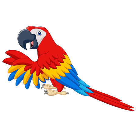 macaw: Vector illustration of Cartoon funny macaw isolated on white background Illustration