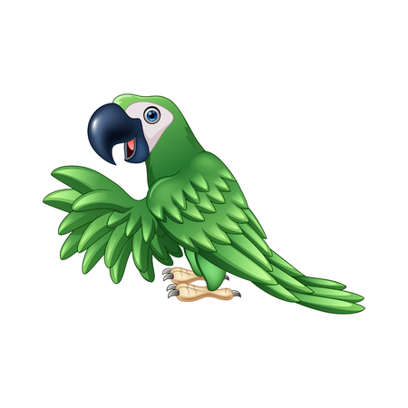 green parrot: Vector illustration of Cartoon green parrot