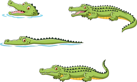timid: Vector illustration of Crocodile collection set