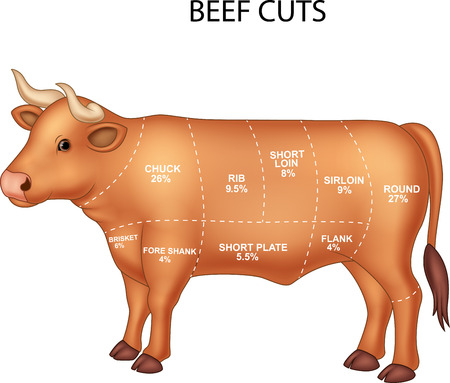 flank: illustration of Cut of beef set