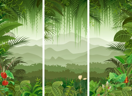 illustration of Set of three tropical forest background