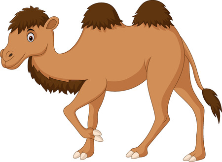 Vector illustration of Cute camel cartoon isolated on white background