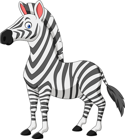 Vector illustration of Cartoon zebra isolated on white background