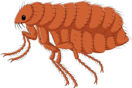 Illustrazione vettoriale di aragosta di cartone animato isolato su sfondo bianco Archivio Fotografico - 85233661