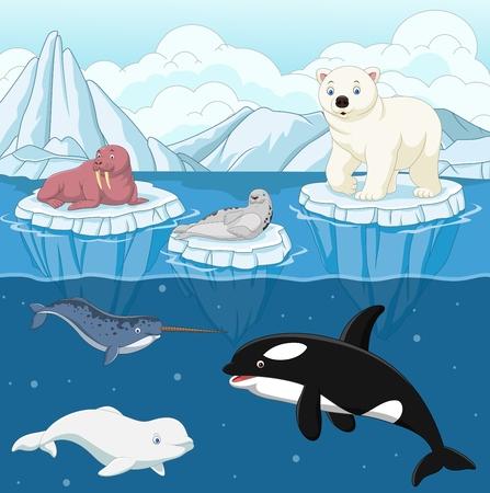 Illustration vectorielle de dessin animé animal arctique sauvage sur le pôle nord Banque d'images - 86194295