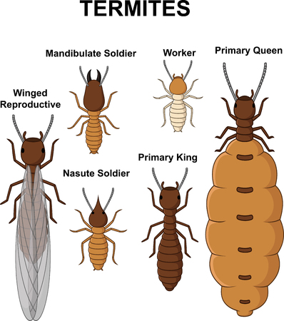 Cartoon type of termites collection set Illustration