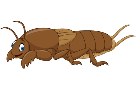 Cartoon mole cricket Illustration
