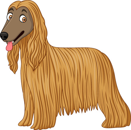 Afghan Hound dog Illustration