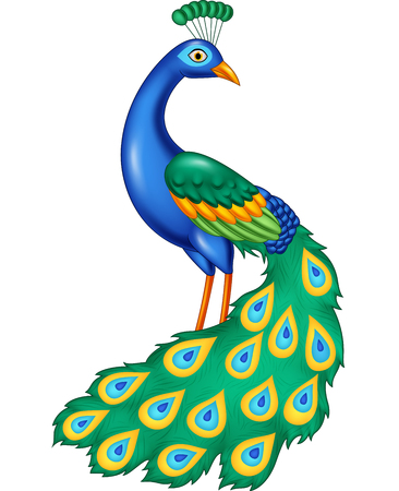 Vector illustration of Cartoon beautiful peacock