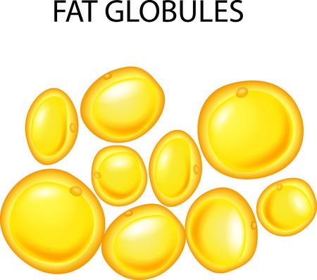 Ilustración de vector de glóbulos de grasa