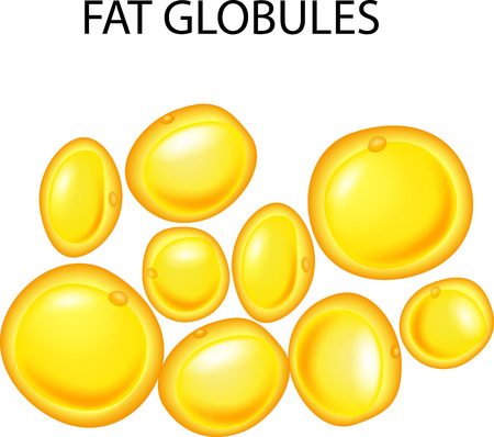 Vector illustration of fat globules