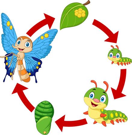 Illustratie van de levenscyclus van een vlinder Vector Illustratie