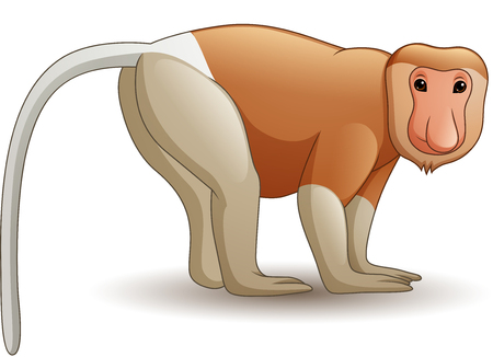 Vector illustration of Cartoon proboscis monkey Illusztráció