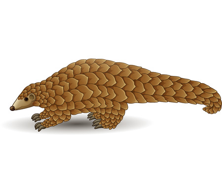 Vector illustration of Cartoon pangolin isolated on white background