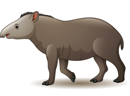 Illustration of american tapir isolated on white