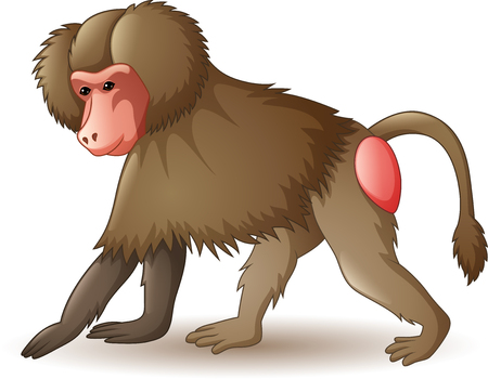 Vector illustration of baboon isolated on white