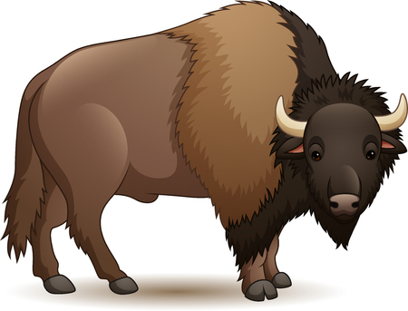 Vector illustration of bison isolated on white