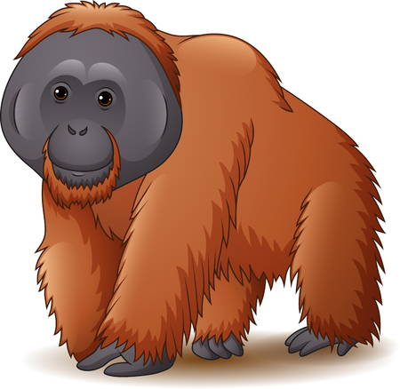 Vector illustration of orangutan isolated on white background