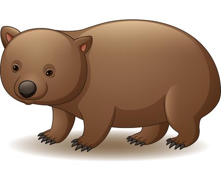 Vector illustration of wombat isolated on white background