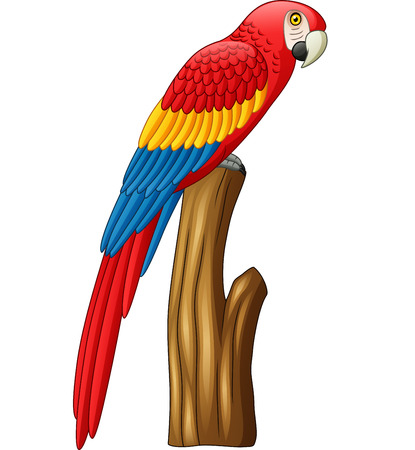 Vector Illustration of macaw on a branch