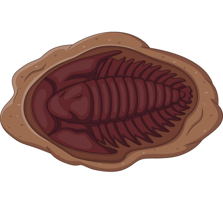 Illustration of trilobite fossil on a white background