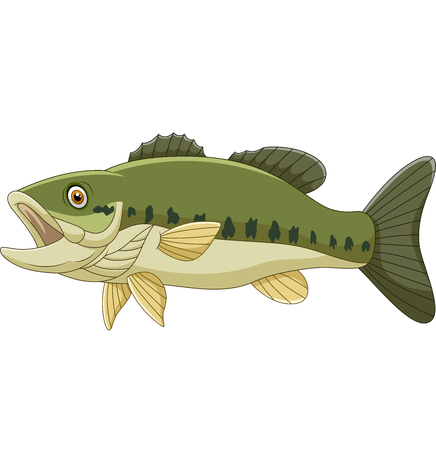 Vector illustration of Cartoon bass fish isolated on white background Ilustração